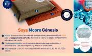 Almohada Génesis